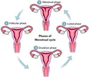 ovulation-pregnancy-test